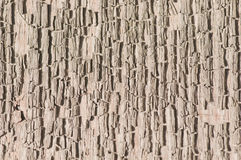 Texture of the old wood. Stock Image