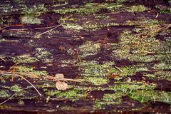 Texture of old wood in the forest, covered with moss and vegetation royalty free stock image