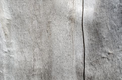 The texture of old wood gray Stock Image
