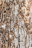 Texture old wood same stone Royalty Free Stock Photo