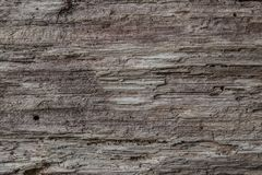Texture of Old Wood Tree. Royalty Free Stock Photos