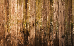 Texture of old wood wall Stock Image
