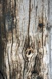 Texture of old wooden board Stock Photography