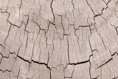 Texture of old wooden log Royalty Free Stock Photography