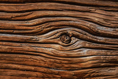 Texture of an old wooden log. Front view of a wooden log Royalty Free Stock Image