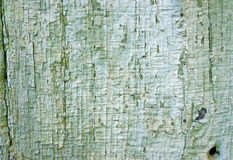 Texture of old wooden wall with a faded green flaky paint Royalty Free Stock Images