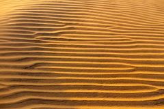 Texture onduleuse arénacée jaune de dunes Image stock