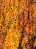 Texture orange humide naturelle de mur en pierre de fond Photographie stock libre de droits