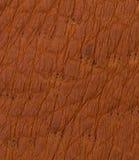 Texture ou fond de cuir de Brown Image libre de droits