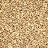 Texture ou fond organique écrite de céréale de blé Photographie stock