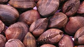 Texture of outdoor clams. In the garden stock footage
