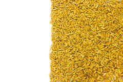 Texture Of Paddy Rice Royalty Free Stock Photography
