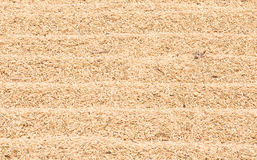 Texture paddy rice Stock Image