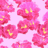 The texture of the paeonia Royalty Free Stock Image