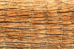 Texture of palm bark macro. Palm tree large trunk detailed structure background and texture of bark. Palm trunk and bark close-up. Rough brown palm tree wood stock image