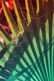 Texture of palm Leaf with vibrant gradient color royalty free stock images