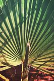 Texture of palm Leaf with vibrant gradient color royalty free stock photo