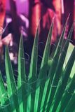 Texture of palm Leaf with vibrant gradient color stock photos