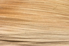 Texture of palm limb. Closeup texture of dry palm limb, use for background Royalty Free Stock Image