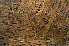 Texture of palm tree bark Royalty Free Stock Images