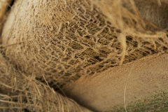Texture of palm tree trunk Stock Photo