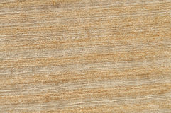 Texture of papyrus Royalty Free Stock Image