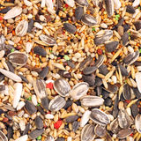 Texture of parrot fodder Stock Image