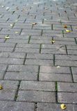 Texture path of stone tiles with autumn leaves Royalty Free Stock Image