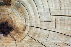 Texture, pattern. Bark of tree. the intensity of its tone relati. Ve to the background. halftones and highlights are shown by simple tonal planes. a rigid royalty free stock photography