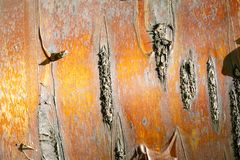 Texture, pattern. Bark of tree. the intensity of its tone relati. Ve to the background. halftones and highlights are shown by simple tonal planes. a rigid stock image