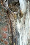 Texture, pattern. Bark of tree. the intensity of its tone relati. Ve to the background. halftones and highlights are shown by simple tonal planes. a rigid royalty free stock photos