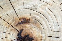Texture, pattern. Bark of tree. the intensity of its tone relati. Ve to the background. halftones and highlights are shown by simple tonal planes. a rigid stock photo