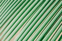 Texture and pattern of palm leaves. sheet coconut palms Macro shot royalty free stock images