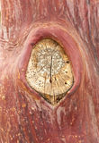Texture pattern of peeling bark on tree Royalty Free Stock Photography