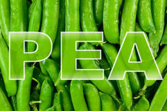 Texture of pea pods young Stock Images