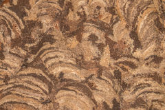 The texture of peel wasp nest Royalty Free Stock Photo
