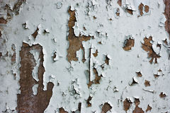 Texture of peeling painted Stock Images