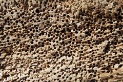 Texture of perforated stone Stock Images