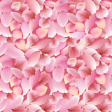 Texture from petals of rose, sakura and lotus isolated on white background Royalty Free Stock Image