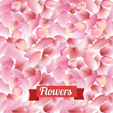 Texture from petals of rose, sakura and lotus on white background Royalty Free Stock Photo