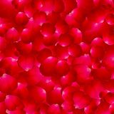 The texture of the petals of roses.Vector Royalty Free Stock Photo
