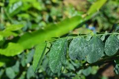 Texture and photos of green leaves in a tropical climate stock photo