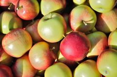 Texture of pile of ripe apples Royalty Free Stock Photography