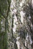 Texture of a pine bark Stock Photos