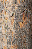 Texture of pine bark Stock Photo