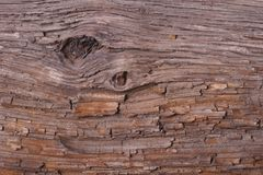 Texture Pine bark of a tree. background. Royalty Free Stock Images
