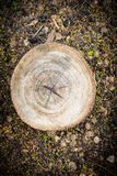 Texture of pine wood Stock Photography