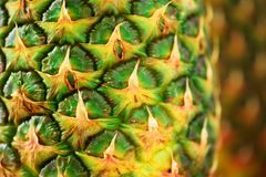 Texture of pineapple skin. Copy space. Beauty and diet concept. Macro shoot of pineapple fruit. Stock Image