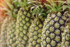 Texture of pineapple skin for nature background Stock Image