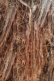 Texture of the plant fibers. Of the roots of tropical plants Stock Image
